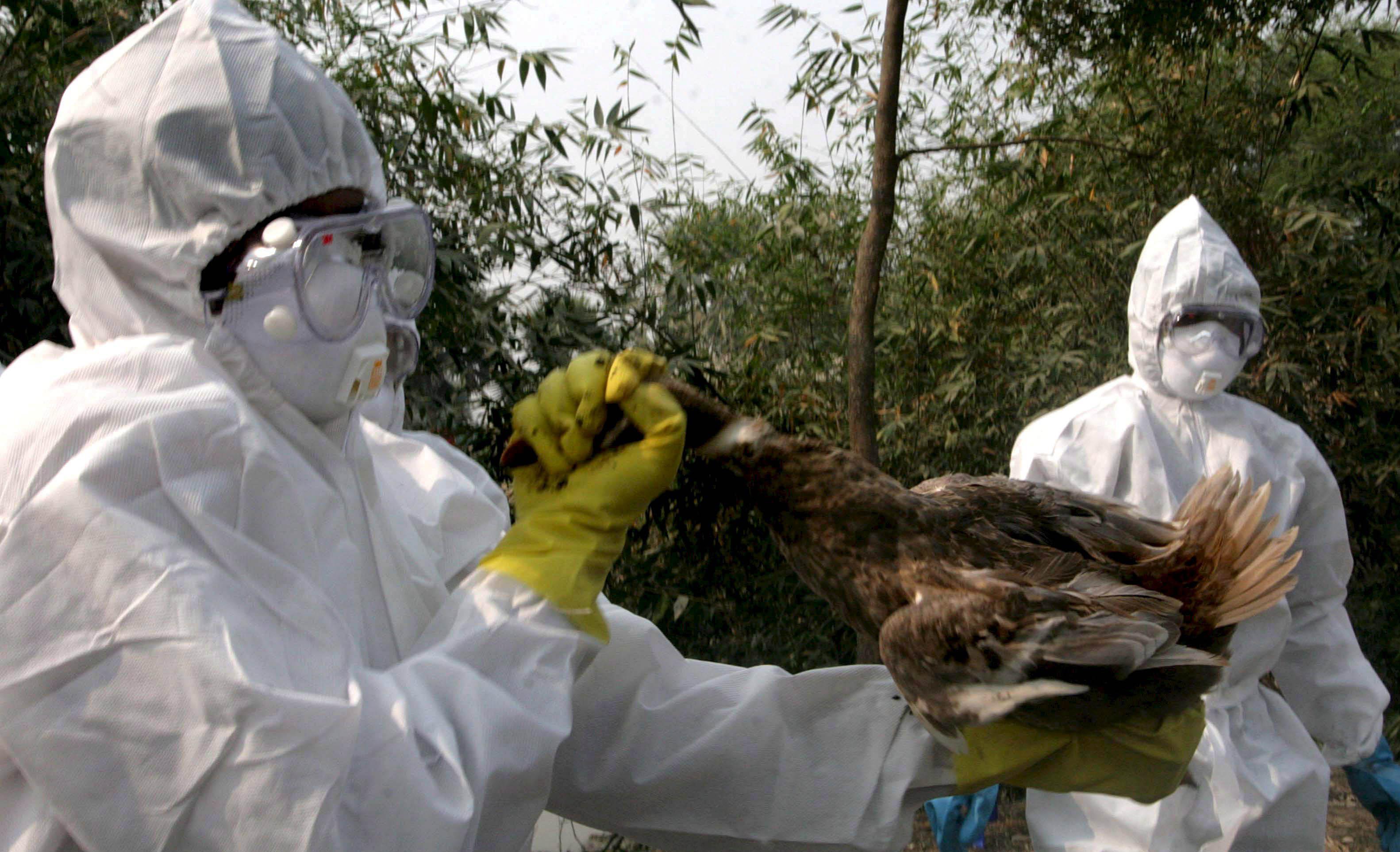 «gripe aviar» y «gripe aviaria» | Fundéu BBVA
